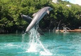 activities-dolphin