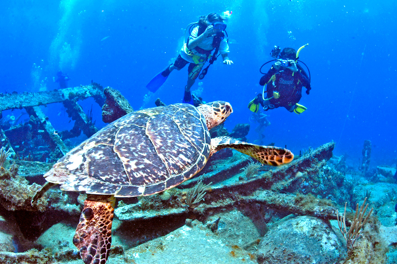 Diving BVI